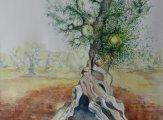 «alter Olivenbaum»